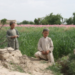Try Eradicating Afghanistan's Poppies; Blow $7.6 Billion