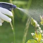 New 'Harmless Herbicide' to Compete with Monsanto's RoundUp