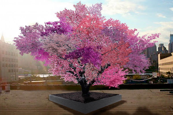 Tree Produces 40 Different Types of Fruit