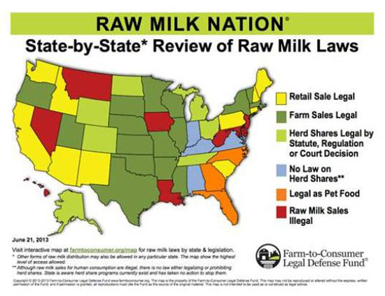 Making Clean Raw Milk: A Simple Guide