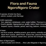 Flora Fauna