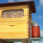 Beekeepers Dream: A Better Way To Harvest Honey From Beehives
