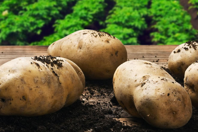 Sustainability on Steroids: Organic Farmer Grosses $100K an Acre