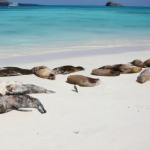 500 more Dead Sea Lions; Fukushima Radiation Continues