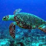 Engineers Develop Self-charging Turtle Surveillance Robot